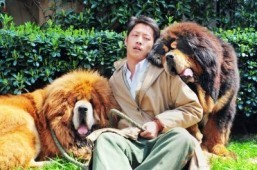 "This picture taken on March 18, 2014 shows an unidentified man posing for a photo with two Tibetan mastiffs after they were sold at a ""luxury pet"" fair in Hangzhou, in eastern China's Zhejiang province. One of the Tibetan mastiff puppies (L) was sold in China for almost two million USD, a report said on March 19, in what could be the most expensive dog sale ever. ©AFP PHOTO"