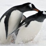 Antarctica, a dream destination for tourists