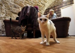 "Cats walk between consumers at the ""Cafe des chats"" (Cat Cafe) in Paris/ San Francisco looks set to get its own cat café this spring. ©AFP PHOTO FRANCOIS GUILLOT"