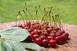 Tart Montmorency cherry juice effective in lowering high blood pressure says new study