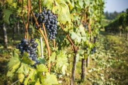 UN to host first conference on wine tourism in Georgia