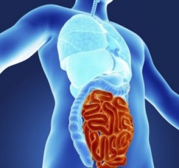 Gut microbiota may have role in neurodegenerative diseases, study finds