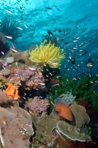 Great Barrier Reef corals clone in bad weather: study