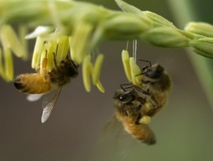 Adventure-seeking bees are a lot like us: study