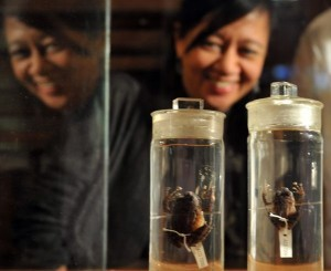 Two new frog species found in Philippine forests