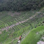 Philippines rice terraces off endangered list: UN