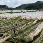 Disaster resilience must be part of LGU dev't plans — VP Robredo