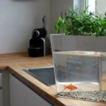 Use your goldfish's waste to grow tomatoes with the EcoFarm