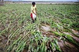 'Lawin' agri, infra damage now at PHP2.5-B