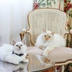 Parisian love of cats reaches luxury hotel market