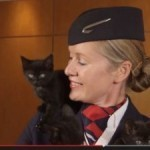 British Airways launches animal channel to de-stress passengers
