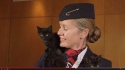 Screenshot: British Airways is launching an animal channel aimed at de-stressing flyers. ©2014 YouTube, LLC