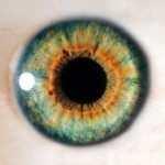 Stem cell advance boosts prospects for retina treatment