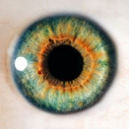 Cells from the eye are 'printed' for the first time