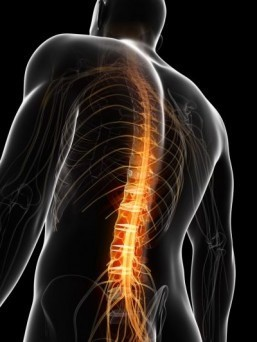 Doctor claims breakthrough in race for spinal 'cure'