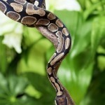 Brain has specific radar for snakes: study