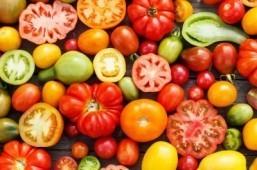 Tomatoes ©Shebeko/shutterstock.com