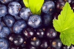 Could a glass of New Zealand blackcurrant juice keep your brain healthy?