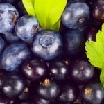 Blueberries could help fight gum disease, reduce antibiotic use