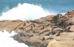 Algae toxin may erase sea lion memory: study