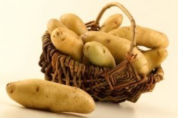 Potato extract stabilizes weight despite calorie-laden diet: study