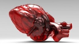 Scientists grow human heart tissue