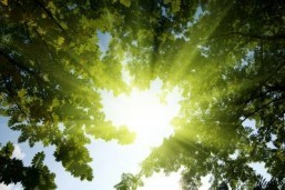 British researchers found exposure to sunlight alters the level of nitric oxide in the skin, dilating blood vessels and thus easing hypertension. ©Iakov Kalinin/shutterstock.com