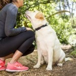 Quantifying how pets improve health